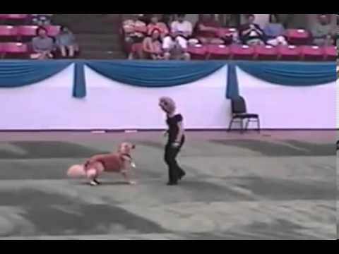 Un perro que baila mejor que Travolta