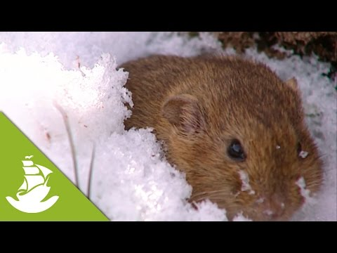 Lemmings - Protection for icy outside air