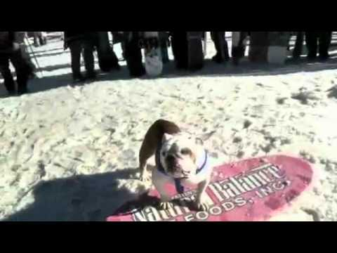 Pitbull, maneja bien el skateboard y la tabla de playa.