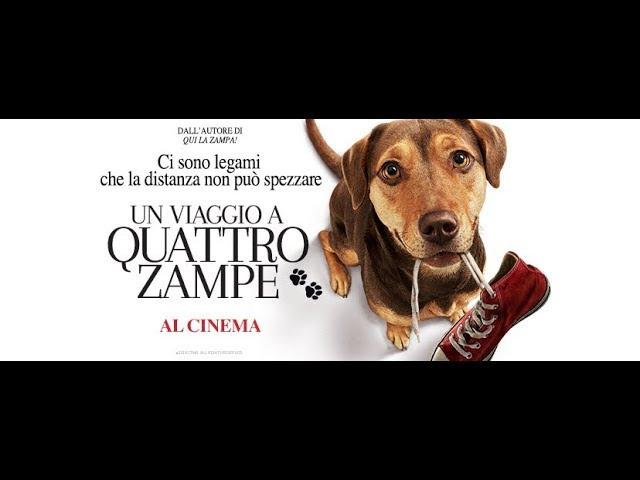 Anteprima Immagine Trailer Un Viaggio a Quattro Zampe, trailer ufficiale italiano