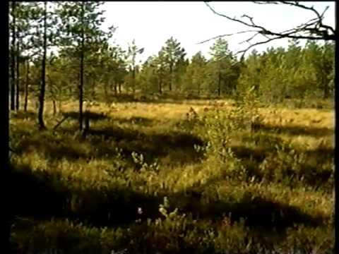 Torv - från natur till energi - (C) 1996 Neova