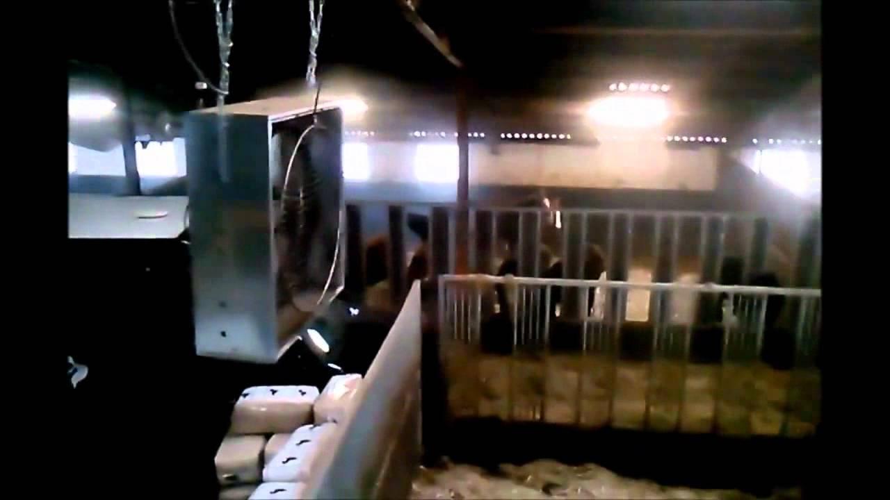 Sistema de arrefecimento e eliminação de odores num estábulo