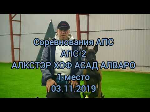 Чемпионат АПС(аттестация прикладных собак)