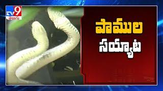 Snake Dance in Tirumala ! - TV9