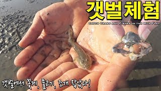Video I caught crabs and fishes in the mud flat !!! MP3, 3GP, MP4, WEBM, AVI, FLV Agustus 2018