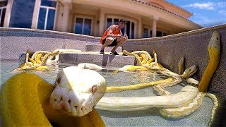 I Filled my Swimming Pool with GIANT SNAKES!! **scary**
