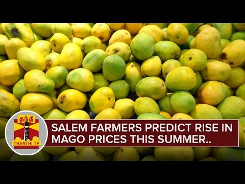 Salem-Farmers-predict-rise-in-Mango-prices-this-Summer-season-Thanthi-TV