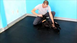 Canine Side Bend Exercies (Ab work out for your dog)