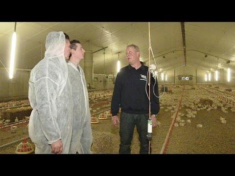 «Έξυπνη» κτηνοτροφία στις φάρμες της Ευρώπης – futuris