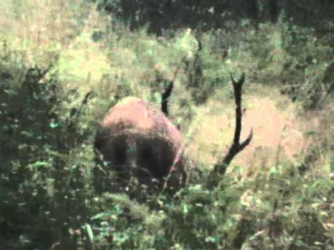 polowanie jelenie