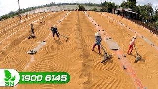 Nông nghiệp | Xuất khẩu gạo khó tăng mạnh những tháng tới?