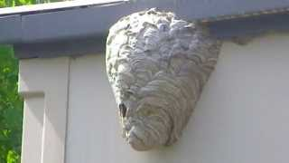 This Guy Will Show You How To Destroy A Hornets Nest