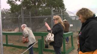 Mar 20, 2015 ... New Guinea Singing Dogs from Palm Beach Zoo visit WPTV - Duration: 3:56. nWPTV News  West Palm Beach Florida 3,792 views. 3:56.