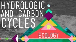 The Hydrologic and Carbon Cycles