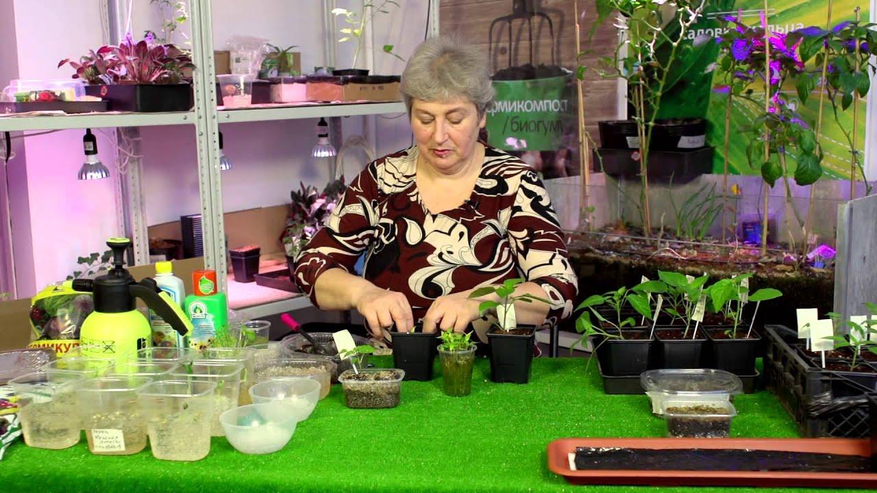Смотреть онлайн:  Семена и рассада продолжение. Добрый урожай 7