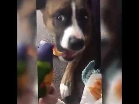 questo papá pappagallo sfama il suo amico cane! che coppia!