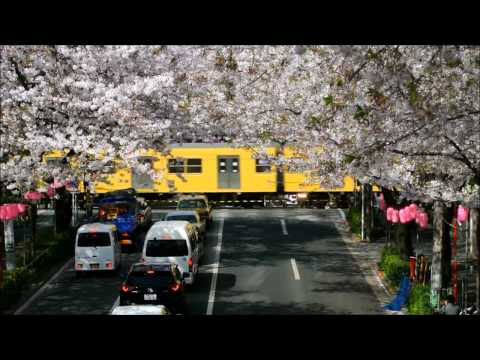 Cherry blossoms on the Seibu Shinjuku Line in Tokyo,Japan part1 (видео)