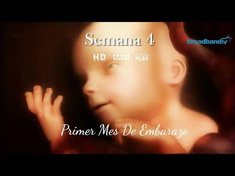 Primer Mes De Embarazo (1-4) | Primeros Síntomas De Embarazada