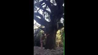 על חרדה, נפילות מעצים וקפיצות של תודעה