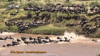 Serengeti Tanzania  City new picture : The Great Migration -- on safari in Tanzania's Serengeti with Africa Odyssey -- The Great Migration