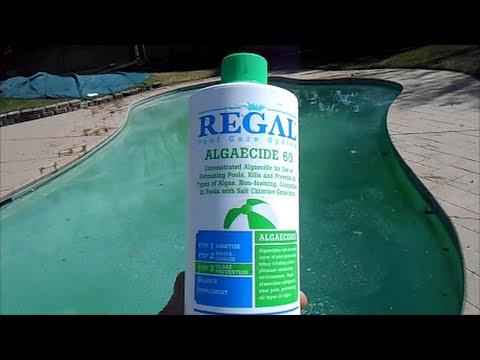 Kill Algae using Regal Algaecide 60 Polyquat