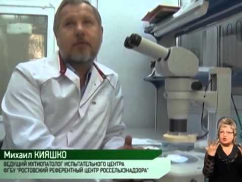 Россельхознадзор провел проверку прудовых хозяйств в Ростовской области