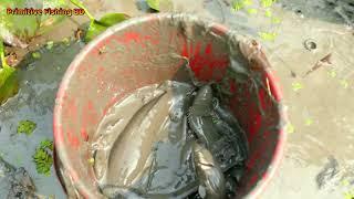 Video Primitive Hand Fishing। Catch A Lot of Fish By Professional Fish Hunter MP3, 3GP, MP4, WEBM, AVI, FLV Maret 2019