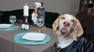 Dog Makes Romantic Dinner for Two: Funny Dogs Maymo & Penny by Maymo