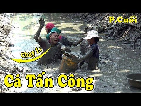 Đang Bắt Cá Bầy Cá Nổi Loạn Cả Đội Bỏ Chạy Thục Mạng/Bắt Được Cá Lóc Khủng Còn Xót/NGÃ NĂM TV - Thời lượng: 40 phút.