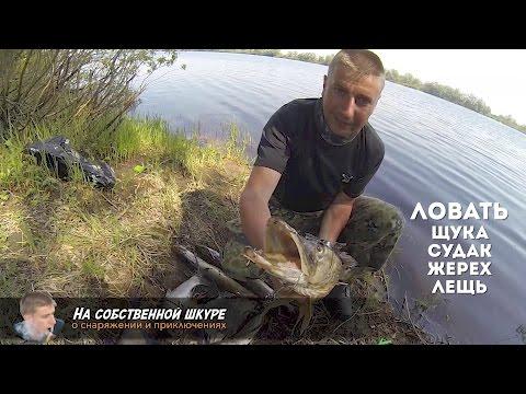 где ловить рыбу на ильмене