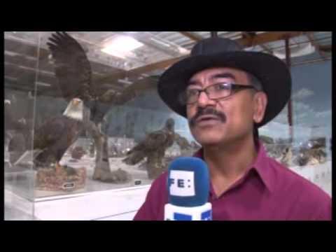 René Corado, el líder guatemalteco del aviario de California