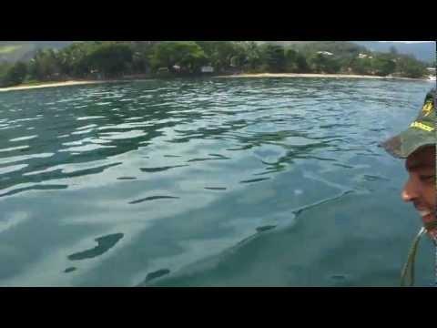 Golfinhos em Ilhabela SP
