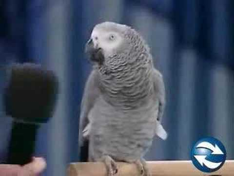 Parrot Entertainer