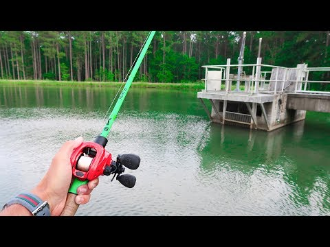 SIGHT FISHING for BRIGHTLY COLORED FISH!!! (Easy to SEE!) - Thời lượng: 6 phút và 25 giây.