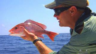 Red Snapper Fishing Offshore of Panama City Florida