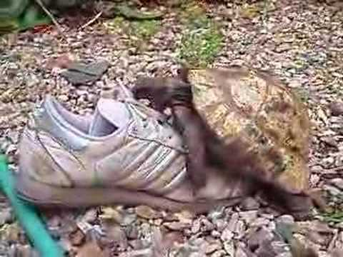 Tortue Epic Funny Cats Cute Compilation Minutes