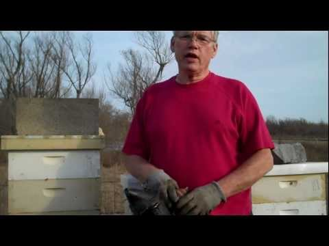 Feeding Honey Bees. Beekeeping Winter & Spring. Different Methods