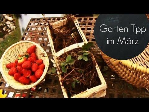 Garten für den Frühling fit machen (Erdbeeren im Mä ...