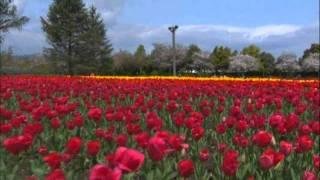春のなばなの里でチューリップまつりを楽しもう