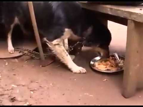 Learn To Share Stingy Man, Very Funny Video