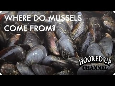 Ever Wondered Where Your Mussels Come From? | food.curated. | Hooked Up Channel