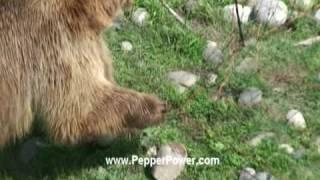 Video Bear Shocked with electric fence. UDAP Bear Shock electric Food Fence (Forest Service approved) MP3, 3GP, MP4, WEBM, AVI, FLV November 2017