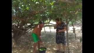 """LEIA O TEXTO E ENTENDA AS BENFEITORIAS DO EMBUNa seca, o pé de umbu é como uma caixa d'água. As batatas que ficam na raiz são como caçambas, chegam a acumular até 1,5 mil litros de água. Chova ou faça sol, o umbuzeiro nunca deixa de florescer na primavera. No verão, outra certeza: os frutos brotam dos galhos em grande quantidade. Por isso, ele é a árvore sagrada do sertão, como disse o escritor Euclides da Cunha.Na época da safra, o sertanejo troca a lavoura por longas caminhadas. Pai, mãe, filhos, todos na trilha dos umbuzeiros. A safra do umbu dura quatro meses: vai de janeiro a abril.A maior alegria para os catadores é encontrar o chão coalhado de umbu. São as frutas maduras que o vento derrubou. Na hora de catar, quanto mais rápido, melhor. Para milhares de nordestinos, o umbu é a única renda.Os doces de umbu já estão chegando às escolas da região como reforço da merenda escolar. A novidade divide opiniões e paladares.""""A tendência é o paladar deles se acostumar com os produtos"""", diz a nutricionista Érica Borges Gama.Para os nutricionistas, a geléia, o suco e o doce de umbu são os alimentos mais energéticos da merenda escolar na região. As informações nutricionais dizem o seguinte: cada 100 gramas da fruta contém 20 miligramas de cálcio, fósforo, ferro, 30 miligramas de vitamina A, 33 miligramas de vitamina C, além de vitamina B1. Mas qual é o benefício que isso pode trazer para a saúde?A professora Maria Spínola, pesquisadora da Universidade Federal da Bahia (UFB), diz que o umbu ainda é uma fruta pouco estudada, mas algumas propriedades medicinais já estão comprovadas.""""O um umbu possui metade de vitamina C do suco de laranja. Então, é uma contribuição como fonte de vitamina C maior do que da uva e de outros frutos"""", revela Maria Spínola.Das pesquisas dos cientistas, virão mais informações sobre o umbu e o próprio umbuzeiro."""