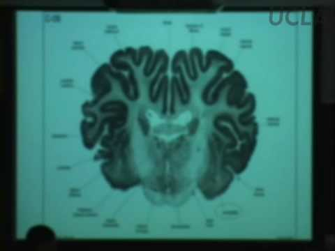 Behavioral Neuroscience Lab, Lec 3, Psychologie 116, UCLA