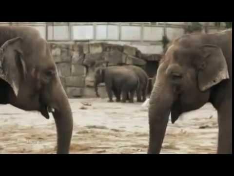 Deutschland: Hinter den Kulissen der deutschen Zoos