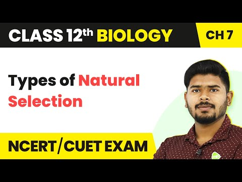 Types of Natural Selection - Evolution | Class 12 Biology