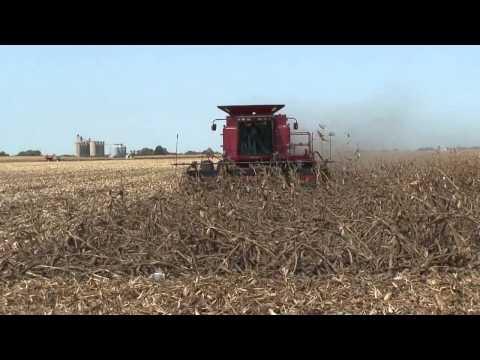 Combine Corn Reel in Down Corn (front view)