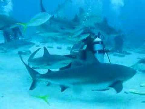 Scuba Sharks