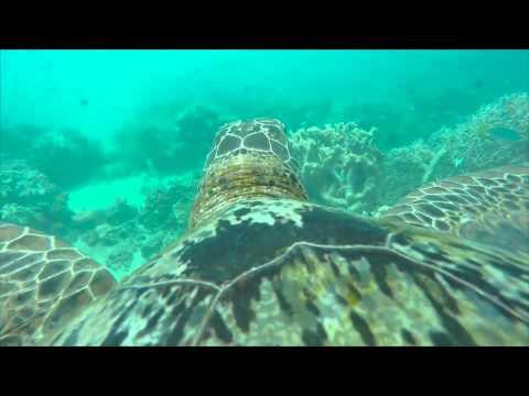 Gaaf! Schildpad met GoPro