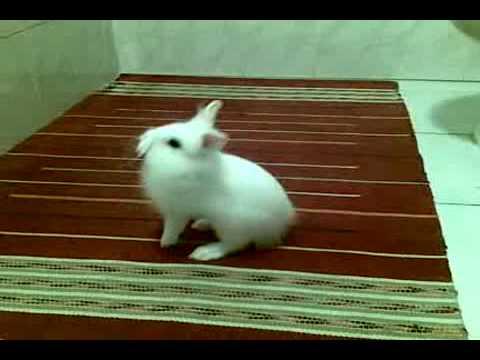 pucci il coniglio pazzo!